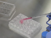 Colony Forming Cell (CFC) Assay for Human Hematopoietic Cells thumbnail