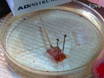 Physiological Experimentation with the Crayfish Hindgut: A Student Laboratory Exercise thumbnail
