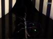 Studium der neuronalen Basis Adaptive Fortbewegung bei Insekten thumbnail