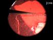 に形態学的スケーリングの関係を推定するためにボディサイズの実験的操作<em>ショウジョウバエ</em thumbnail