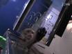 Adfærdsmæssige Vurdering af håndelag i ikke-menneskelige primater thumbnail