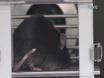 Habituation and Prepulse Inhibition of Acoustic Startle in Rodents thumbnail