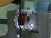 Preparation of Intact Bovine Tail Intervertebral Discs for Organ Culture thumbnail