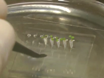 RootChip를 사용하여 루트 환경의 신속한 조작과 Arabidopsis 루트 성장의 시간 저속 형광 이미징 thumbnail
