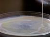 Prostaglandin Extraction and Analysis in <em>Caenorhabditis elegans</em> thumbnail
