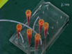 Label-free Isolation and Enrichment of Cells Through Contactless Dielectrophoresis thumbnail