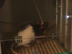 A Procedure to Study the Effect of Prolonged Food Restriction on Heroin Seeking in Abstinent Rats thumbnail