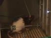 一个过程来研究延长食品的限制对海洛因寻求戒断大鼠的影响 thumbnail