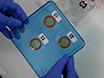 Imaging Membrana cellulare Pregiudizio e processi subcellulari coinvolti nella riparazione thumbnail
