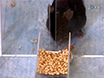 Study Motor Skill Learning by Single-pellet Reaching Tasks in Mice thumbnail
