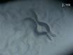 Протокол заразить<em&gt; Caenorhabditis Элеганс</em&gt; С<em&gt; Сальмонелла Typhimurium</em thumbnail