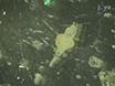 Stab Wound Injury of the Zebrafish Adult Telencephalon: A Method to Investigate Vertebrate Brain Neurogenesis and Regeneration thumbnail