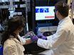 यूनिवर्सल रीयल टाइम में गहरी ऊतक मानव एंजियोग्राफी और कार्यात्मक पूर्व नैदानिक अध्ययन के लिए तीन आयामी Optoacoustic इमेजिंग जांच हाथ से आयोजित thumbnail