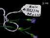 Blomster-Dip Transformasjon av Flax (<em&gt; Linum usitatissimum</em&gt;) For å generere Transgene progenies med en høy Transformation Ranger thumbnail