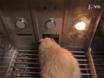 Sıçanlar Davranış Esneklik değerlendirilmesi için Edimsel Prosedürleri thumbnail