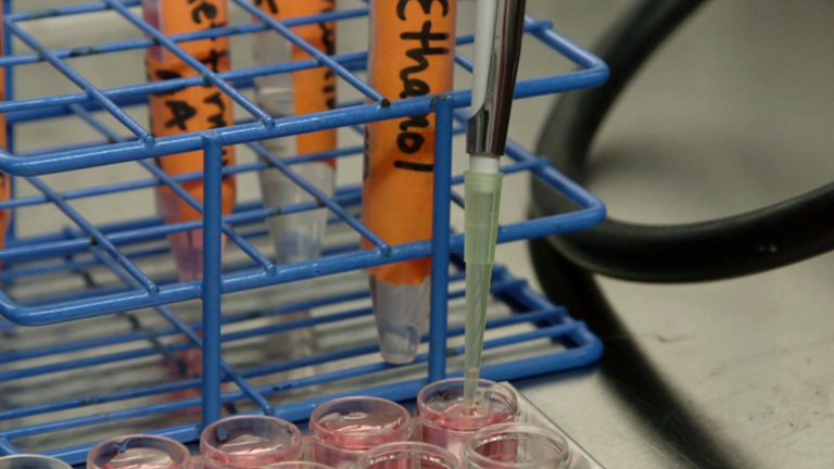 Using Mouse Mammary Tumor Cells to Teach Core Biology Concepts: A Simple Lab Module thumbnail