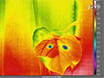 The Use of High-resolution Infrared Thermography (HRIT) for the Study of Ice Nucleation and Ice Propagation in Plants thumbnail