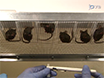 Valutazione della perigenitale Sensibilità e prostatica Mast attivazione delle cellule in un modello murino di Neonatale separazione materna thumbnail