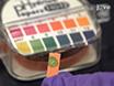 PCR ile Gün 30 Domuz Embriyolar Doğru ve Fenol Ücretsiz DNA cinsiyet tayini thumbnail