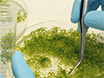 Chromatin Immunoprecipitation Assay for the Identification of Arabidopsis Protein-DNA Interactions <em>In Vivo</em> thumbnail