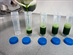 Procedure to Evaluate the Efficiency of Flocculants for the Removal of Dispersed Particles from Plant Extracts thumbnail
