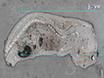 Ganzkörper-Massenspektrometrie Imaging durch Infrarot-Matrix-assistierte Laser-Desorptions-Elektrospray-Ionisations (IR-MALDESI) thumbnail