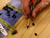 Pålitelig metode for å vurdere frø spiring, Dormancy, og dødelighet under feltforhold thumbnail