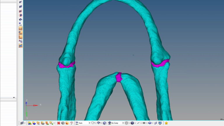 Het bouwen van Finite Element modellen te onderzoeken zebravis Jaw biomechanica thumbnail