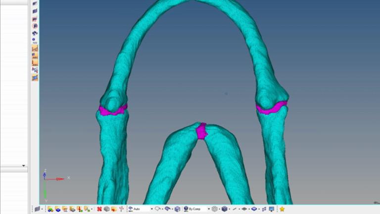 Zebrafish의 턱 역학을 조사하기 위해 유한 요소 모델을 구축 thumbnail