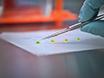 2 डी और 3 डी मैट्रिसिस के लिए रैखिक invadosome गठन और गतिविधि अध्ययन thumbnail