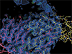 Using X-ray Crystallography, Biophysics, and Functional Assays to Determine the Mechanisms Governing T-cell Receptor Recognition of Cancer Antigens thumbnail