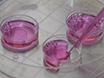 Målrettet plasmamembran Levering av en hydrofob Cargo innkapslet i en Liquid Crystal partikler Carrier thumbnail