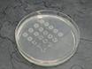 Producción de nanopartículas metálicas por ablación por láser pulsado en líquidos: una herramienta para estudiar las propiedades antibacterianas de las nanopartículas thumbnail