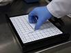 Första utvärdering av antikropp-konjugat modifierad med Viral-derived peptider för att öka cellulära ackumulering och förbättra tumör inriktning thumbnail
