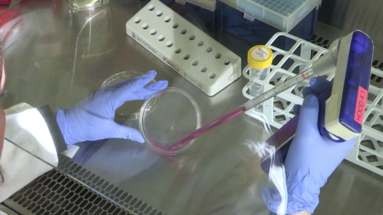 Das Studium der Zellzyklus-regulierten Genexpression durch zwei komplementäre Zellsynchronisationsprotokolle thumbnail