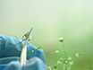 A Method for Characterizing Embryogenesis in <em>Arabidopsis</em> thumbnail