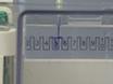 Détermination de l'expression de la surface cellulaire et du taux endocytique des protéines dans les cultures d'astritcy primaires utilisant la biotinylation thumbnail