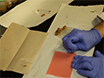 Een rekenkundige methode om te kwantificeren vliegen circadiane activiteit thumbnail
