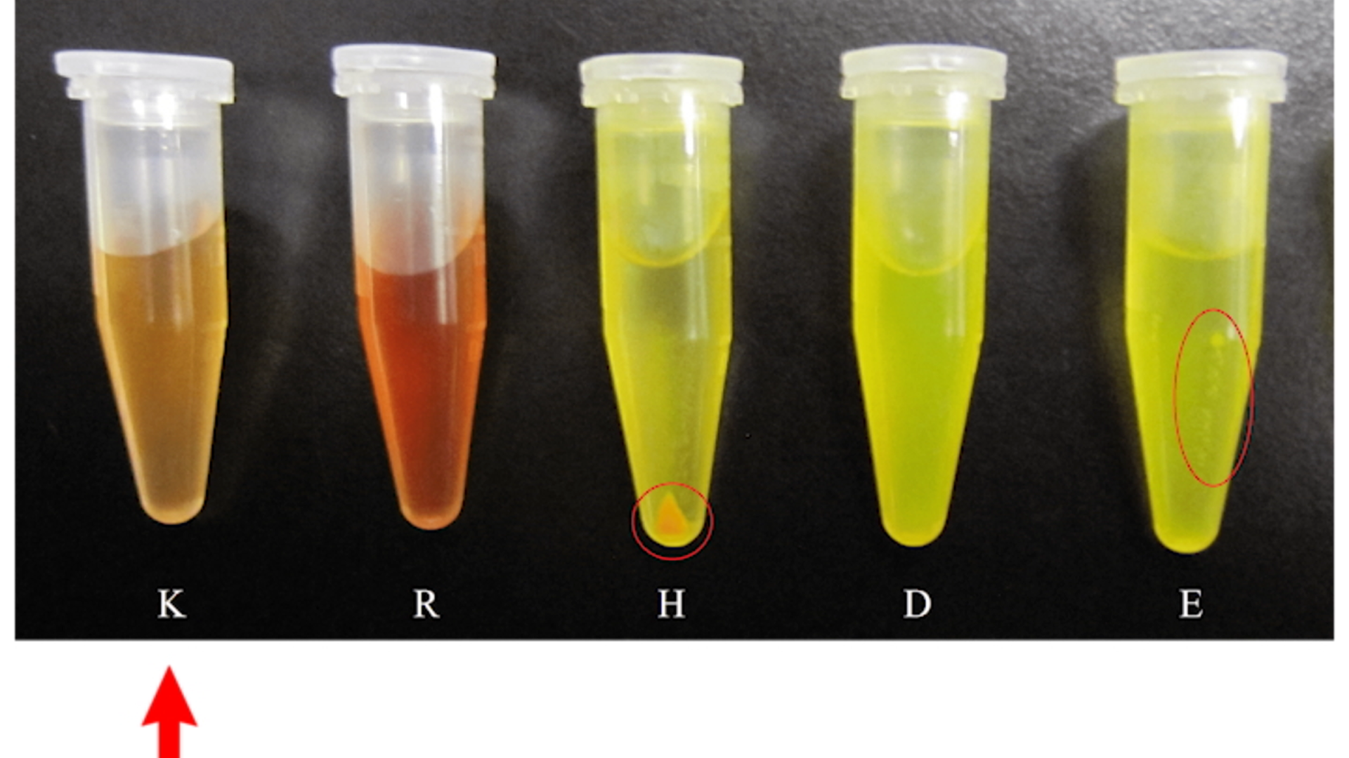 Solubilidad de compuestos hidrófobos en la solución acuosa mediante combinaciones de uno mismo-montaje de péptidos y aminoácidos thumbnail
