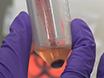 태에서 Autophagy의 규제에 모성 비만과 관련 된 염증의 효과 연구 하는 기본 인간 Trophoblast 모델 thumbnail
