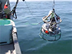 Development of New Methods for Quantifying Fish Density Using Underwater Stereo-video Tools thumbnail