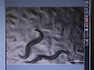 A Simple Method for High Throughput Chemical Screening in <em>Caenorhabditis Elegans</em> thumbnail