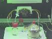 Ricombinante collagene Peptide Microcarriers per l'espansione delle cellule e loro potenziale utilizzo come sistema di consegna di cella in un bioreattore modello thumbnail