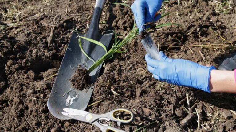 Explorant le Microbiome racine: extraire les données de la communauté bactérienne du sol, rhizosphère et racine endosphère thumbnail