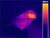 November 2015 - This Month in JoVE: Drosophila Social Space, Structured Rehabilitation for Multifunctional Prosthetics, and Thermal Imaging in Wild Birds thumbnail