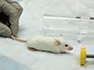 डबल चैंबर Plethysmography द्वारा जागरूक चूहों में श्वसन समारोह का मूल्यांकन thumbnail