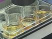 Différenciation, l'entretien et l'analyse des cellules de l'épithélium pigmentaire rétinien humain: un modèle de maladie-dans-un-plat pour les Mutations <em>BEST1</em> thumbnail