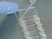 परिधीय रक्त और लसीकावत् ऊतक से प्राथमिक मानव टी कोशिकाओं के Synaptic इंटरफेस का आकलन thumbnail