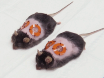 <em>In Vivo</em> Imaging of Reactive Oxygen Species in a Murine Wound Model thumbnail