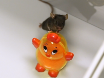 Novel Object Recognition and Object Location Behavioral Testing in Mice on a Budget thumbnail